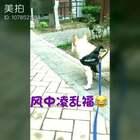 没有一点点防备😍😍😍#宠物##亲爱的,那不是爱情##来福和多吉#@宠物频道官方账号