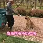 #宠物#哈哈,公园种树的老爷爷看到皮蛋特别喜欢,爷爷让皮蛋把喝的酸奶盒子扔垃圾桶的画面
