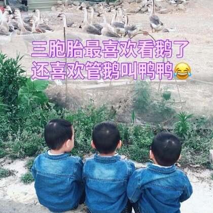 之前去看鹅的视频、哈哈、老是管鸭叫鹅#宝宝#