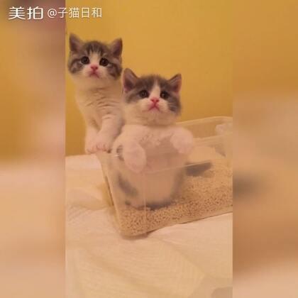 【子猫日和美拍】04-21 20:36