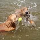 游泳季节又到了#宠物#