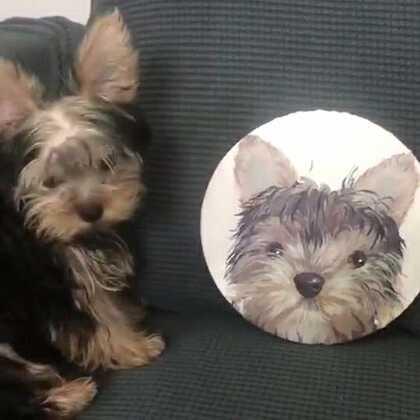 看得出来什么品种的狗狗吗#宠物##画画#