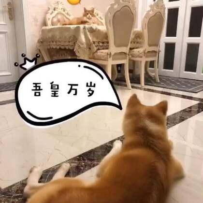 #宠物##家有萌宠#狗眼里的🐈vs猫眼里的🐶……