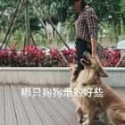 两个狗狗走下随行#宠物##精选#
