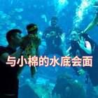 第一次带小棉@小棉的成长日记 看水族馆的时候,我就在想如果我在水里,小棉会是什么反应?没想到潜水想法实现啦!小棉一直好奇的看着我,虽然不知道我是谁,但很开心一直在笑❤️等你长大,妈妈还要给你一次这样的惊喜!这个视频点赞里抽宝贝送188红包❤️#宝宝##小棉成长记#