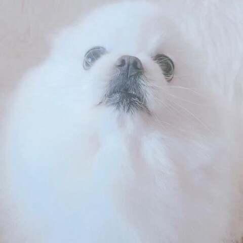 【✨LIVA_刘亦忻🎤美拍】#宠物##宝宝##精选#狗年大吉~