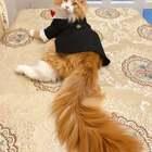 #宠物##家有萌宠#结婚礼服已备好,不用长发及腰,现在娶你可好?🌹