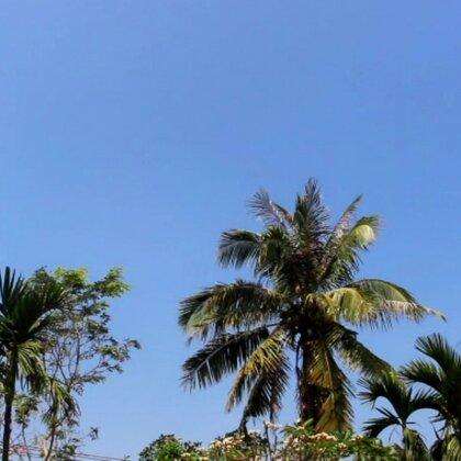 #美食#一道从没觉得好吃的菜,可是却是从小吃到大的菜。小的时候,村里人种的紫色豆都是这样摘自己院前的椰子来一起煮的,可能那时候肉贵,也可能是为了那椰肉的香甜。你呢?有从小吃到大却不大喜欢吃的菜吗?#我要上热门##海南海口#