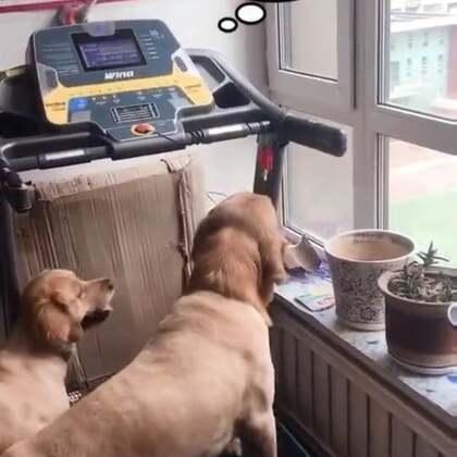 就差二寸啊!哈哈哈哈哈#吃货在行动##宠物#