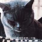 #我的猫片#🐱 猫咪在左 小井在右 阿哈哈哈@美拍小助手