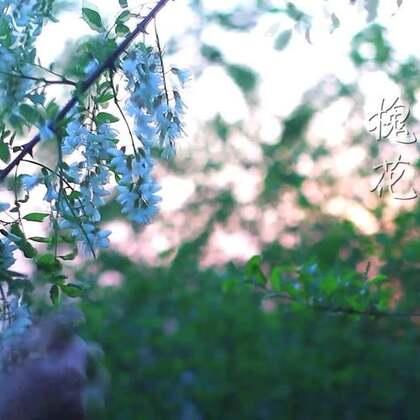 春季美食之【槐花】 每年这个季节,一串串洁白的槐花都会缀满树枝,空气中弥漫着淡淡的素雅的清香,也成为餐桌上最常见美食之一,除了粉蒸槐花,你还知道槐花还有哪些做法吗?#美食##我要上热门#