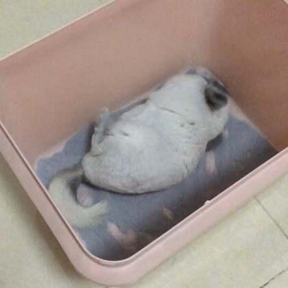 你们要看的淘气宝宝洗澡😄小短手拼命滴刨啊刨,很努力滴打滚可惜翻身太难啊😂