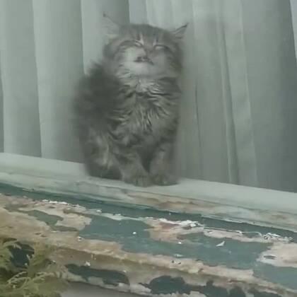 主人看到小猫贴在玻璃上有点奇怪,于是上前敲了敲后....