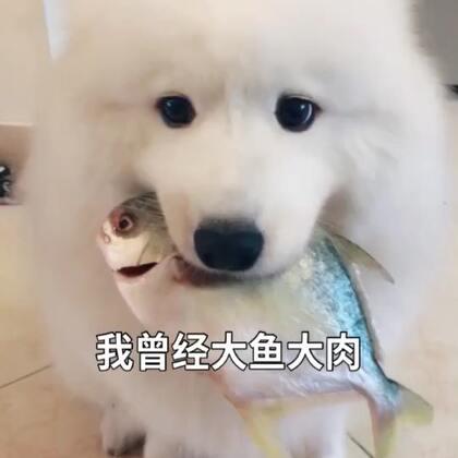 (离人愁)肥布终结版!哈哈哈!#宠物##精选##热门#