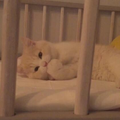 【子猫日和美拍】05-05 20:48