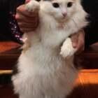 原版!😂😂😂(发一个存稿,好久了)送给喜欢看莎莎跳舞的宝宝们!#宠物##宠物手势舞#
