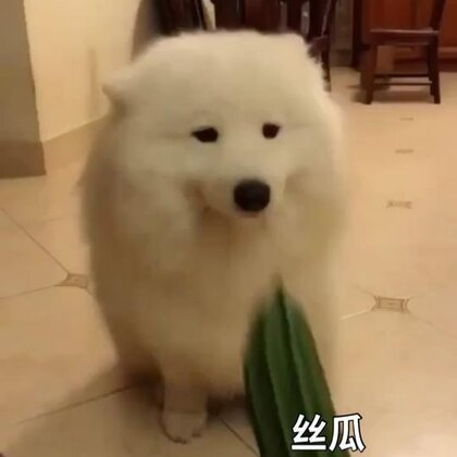 丝瓜➕鞋➕一只马!哈哈哈哈#宠物##精选#