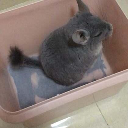 墩墩洗澡的时候这个桶一直在震动😂重量级嘉宾就是不一样,还好咱家桶够大😂😂