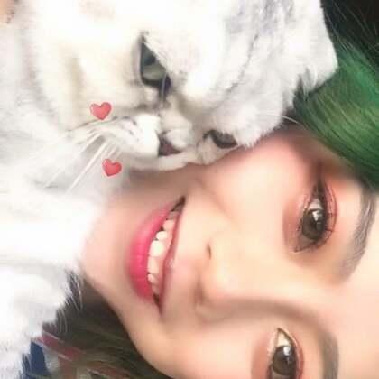 哈哈哈治治颈椎病 喵喵喵 💓#学猫叫##精选##宠物#@美拍小助手