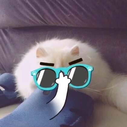 #miumiu#不是说猫咪都胆小吗!为什么我家miumiu上天下地无所不能!没有一样是它怕的!