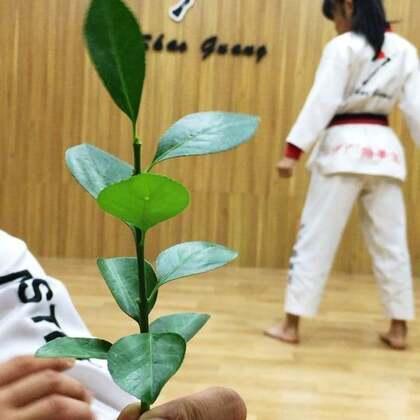 曼曼精准踢树叶🍃#精选##运动##跆拳道#