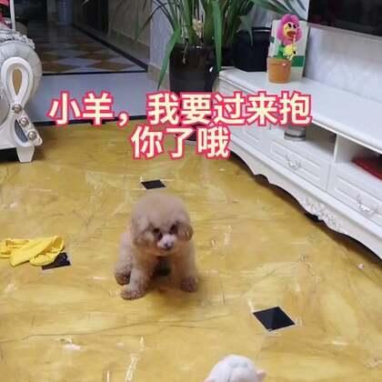 [存货]Jerry喜欢这个小羊哦,嘿嘿周末来了,祝你们周末愉快😍涂麻店铺https://shop.m.taobao.com/shop/shop_index.htm?user_id=699523207&item_id=556919487880&spm=a1z3i.7c.0.ishopheader #汪星人#