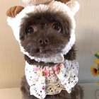 #宠物#你们看我的造型漂亮不,我自己觉得挺漂亮的😜#我的宠物小精灵#