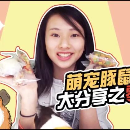 【萌宠豚鼠饲养大分享之零食篇】豚妈妈们看过来啦!