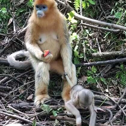 厉害了我的猴!😂