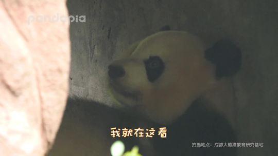 #萌团子日常# 下雨天的时候,你在看熊猫,而熊猫…慎点!否则魔音绕耳!😏
