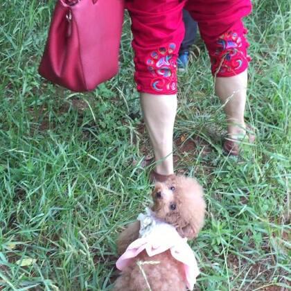 #宠物#-💖公主-甜心💖-公主:愁银,看你们咋还没伦家小短腿走捏快耶😕(这阵子带小丫头👸🏼玩到处游玩,🚘行程2⃣️万公里左右,可开心了呢😉。麻咪感谢关心👸🏼的姨姨姐姐们😘,爱你们哦❤️)#精选##带着宝宝去游玩#
