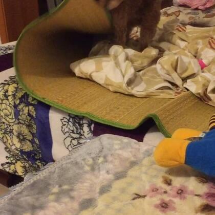 #宠物#✨小石头✨如果正在打算养宠物的又有小小洁癖的看见像垃圾场一样的沙发有何感想😄😄