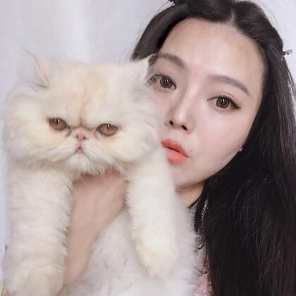 #宠物##miumiu##加菲猫异国长毛猫#就是喜欢💕