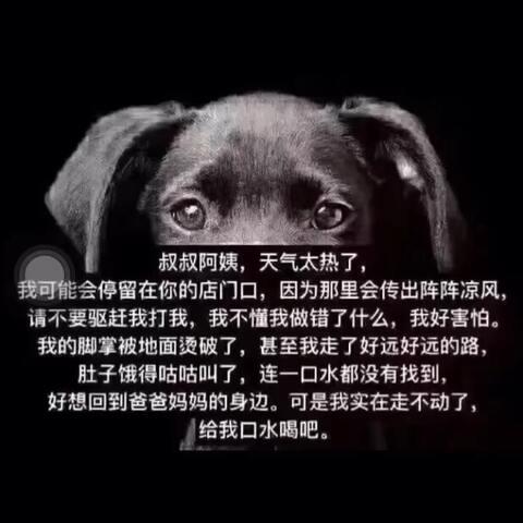 【✨💫紫嫣💫✨美拍】#训练狗狗##宠物#如果遇到请帮帮...