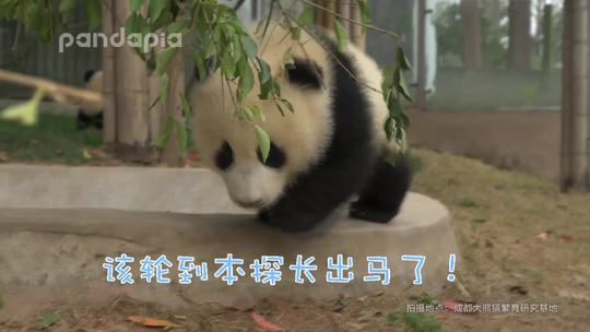 #萌团子日常# 名侦探庆小在积极追捕嫌疑熊的过程中,遭到了对方的强烈反抗,庆小探长在危急关头,采取了战略性撤退的方式……