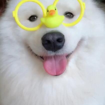 我布最美!#宠物##精选#