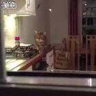 """趁主人不注意一步步靠近的猫咪,每个静止的样子都尽全力在表演了,""""如果我动作够慢我就隐身了""""..😂😂😂"""
