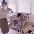 #宠物#日常:组装猫咪别墅