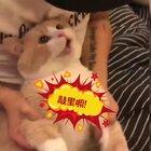 我还是那个吃播!今天会吃炸鸡!!!这个是前几天扣扣空间看的!太可爱了受不了了啊啊啊!!!这几天翻来覆去真的看了有几十遍……好想养猫啊,不能我一个人尖叫!!!侵删!!!我感觉我恋爱了……虽然他已经绝育了……#宠物##萌爪大比拼#