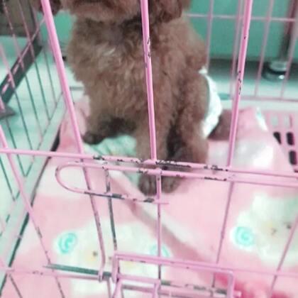 小Kitty特殊时期 不得不把它们分开 小可怜自己睡小笼子。#宠物##泰迪##我要上热门@美拍小助手#