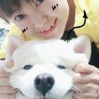 #学猫叫手势舞#来福全程懵呆呆~😂😂😂#宠物#(土豆麻自制宠物零食http://shop.m.taobao.com/shop/shop_index.htm?spm=0.0.0.0&shop_id=117933639 )