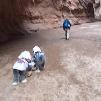 #宠物#在天山神秘大峡谷 这个朵朵啊🙃开心起来就不管不顾