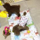 #汪星人##宠物#我们起床拉!最近一天更新好几个视频的节奏,你们喜欢吗?哈哈!http://item.taobao.com/item.htm?id=568964008008莎拉麻麻手工纯棉宠物垫子!
