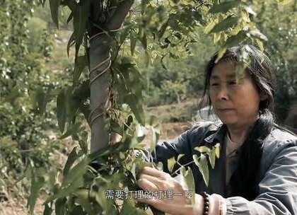 为完成女儿遗愿,63岁母亲植树千万棵,种出万亩森林#二更视频##正能量##我要上热门#