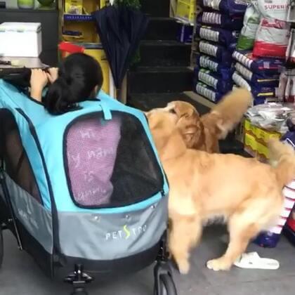 #汪星人##萌宠#我就想坐一下他们的车车而已,两个都不乐意了……