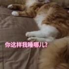 #宠物##家有萌宠#请问我睡哪儿??🤧#哇擦擦#