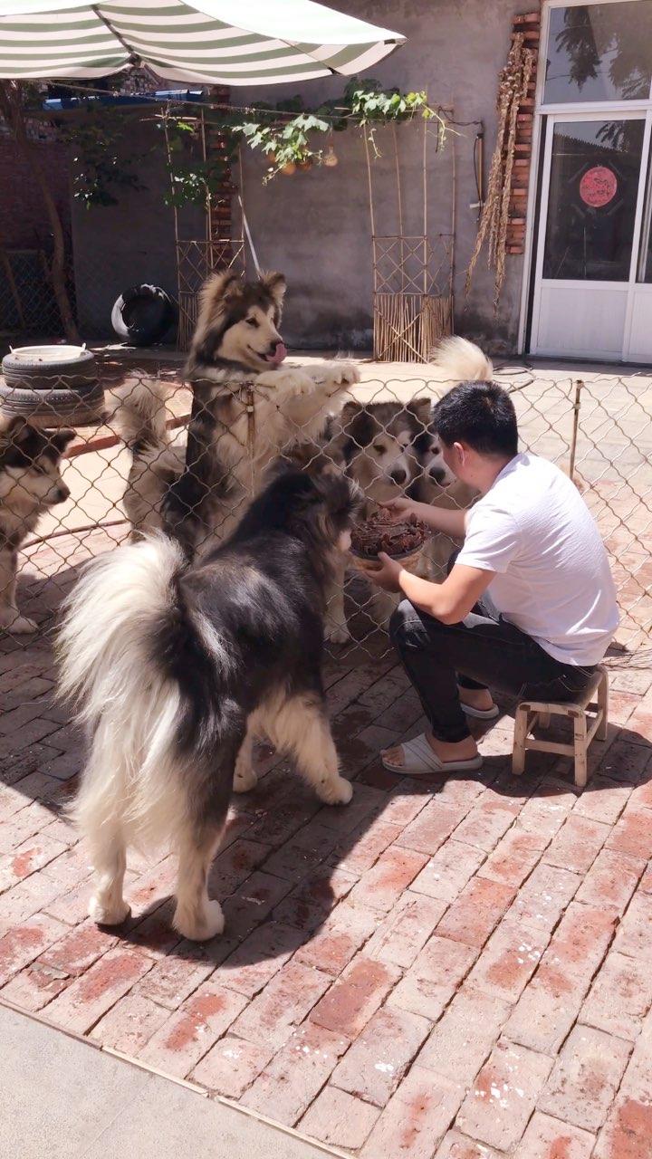 #宠物##汪星人##吃秀#