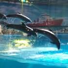 🌝……超级想摸摸海豚...