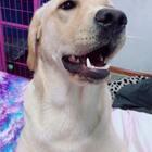 #训练狗狗##宠物#如何让你的爱狗不在叫,就是让她甘拜下风#我要上热门@美拍小助手#@宠物官方频道账号