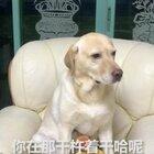 #小布的日常生活# 小布漫威系列之纸侠仙子大战复联狗 #宠物#